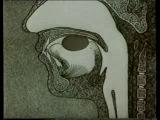 Анатомия и физиология человека 7 Пищеварение